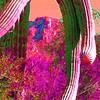 saguaro nat park, dec 8, 2004iSM1