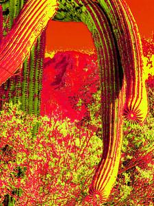 saguaro nat park, dec 8, 2004iSM4