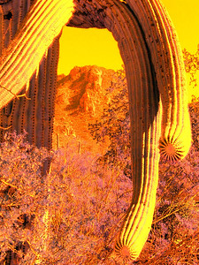 saguaro nat park, dec 8, 2004iSM3