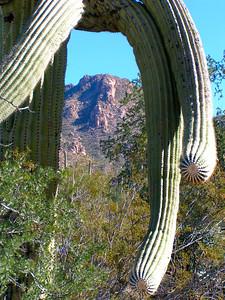 saguaro nat park, dec 8, 2004iSM