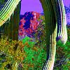 saguaro nat park, dec 8, 2004iSM2