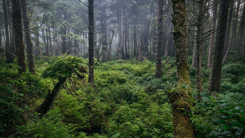 Enchanted Grove