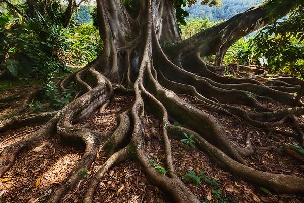 Enter the Banyan