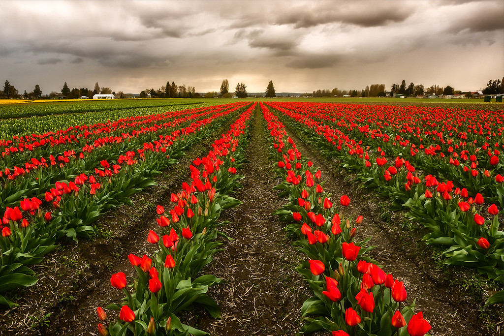 Skagit Valley