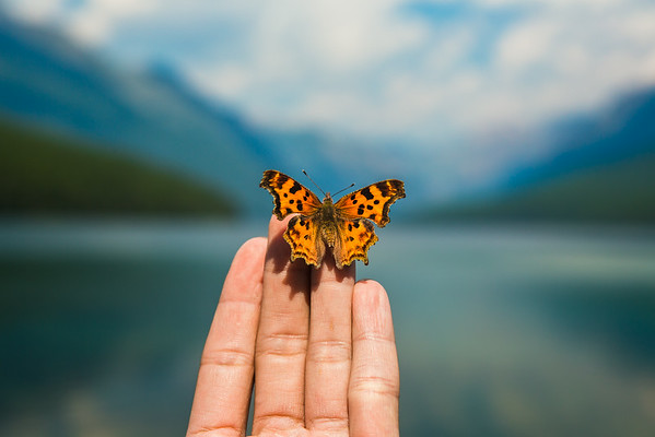 Butterfly at the Lake