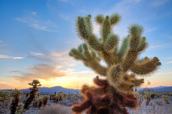 Chola Cactus Gardens