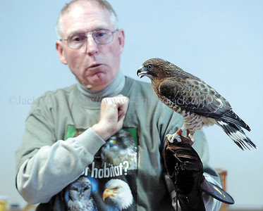 jhraptor1 - A Broad-winged hawk gives a profile look of itself atop of the hand of Ron Walker from Friends with Feathers on Friday as Walker put a presentation for residents at Horizons.