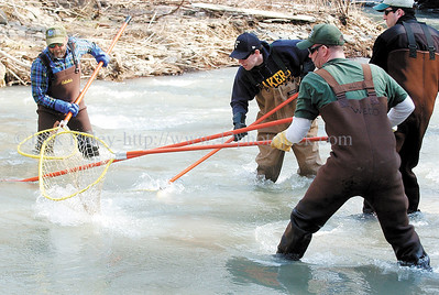 jhshocking4 - Action became fast and furious as (l-r) Dave Olsowsky, eric Olsowsky, and Jim Webb net fish that Pete Austerman (far right) shocked at a hole that was holding a lot of fish.