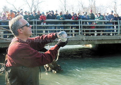jhshocking1 - Sean Hanna of the New York State Department of Environmental Conservation holds up a trout for those surrounding Route 245 at Naples Creek to see a beutiful Rainbow Trout during the DEC's annual sampling of the creek on Thursday, April 22.
