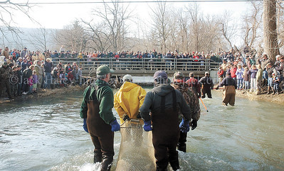 jhshocking6 - Like conquering heros, the DEC are greeted by a huge crowed of on-lookers crowed on Route 245 and the banks of Naples Creek as they come in with their first haul of fish.