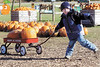 jhpumpkin1 - Brandon Snover of the Little Lamb's Preschool gives all he has to pull two big pumpkins in a wagon on Friday at Wickham's Pick 'n Patch & Corn Maze.
