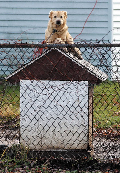 jhsnoopy - Maybe this dog was Snoopy fan from Charlie Brown fame sitting on his dog house. At least he had a good  view  of the High School girls soccer  state  semifinal contest at Homer High School on Friday (11/17) in Homer, NY.