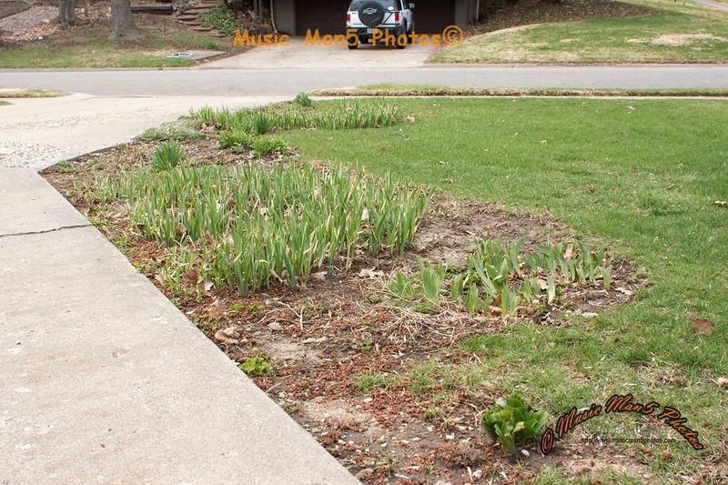 Spring growth - Winter damage<br /> <br /> Prime Lens Month - 28mm f/1.8