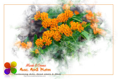 wide angle shot of a blooming orange butterfly bush