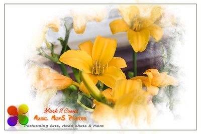 a wide angle view of yellow lilies at dawn in the lily garden
