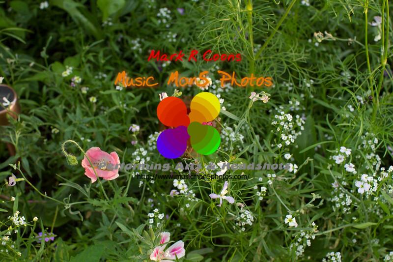 20110701_7D_46831