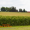 corn field on a cloudy midwestern day