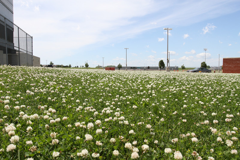 clover field<br /> <br /> my favorite of the week