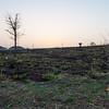 "burn off  sunrise walk <br><center><a href=""javascript:addCartSingle(ImageID, ImageKey)""><img src=""http://www.musicman5photos.com/photos/584931612_TXRui-S.gif"" border=""0""></a></center>  ©Music Man5 Photos"