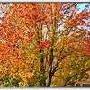 20111111_5D Mark II_55979-Edit