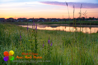 purple flowers and clouds by the pond at sunrise