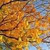 20111009_5D_53119-Edit