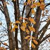 20111023_5D_54436-Edit