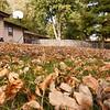 20111010_40D_53142-Edit
