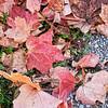 20111023_5D_54439-Edit