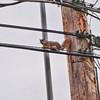 wire walker