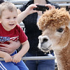 Trying to get a Lama to notice him at the Johnny Appleseed Arts & Cultural Festival on Saturday is Jayson Cardone, 2.SENTINEL & ENTERPRISE/ JOHN LOVE