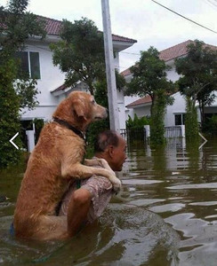 """A man carrying his dog through the flood.  """"I will never leave you behind"""" ."""