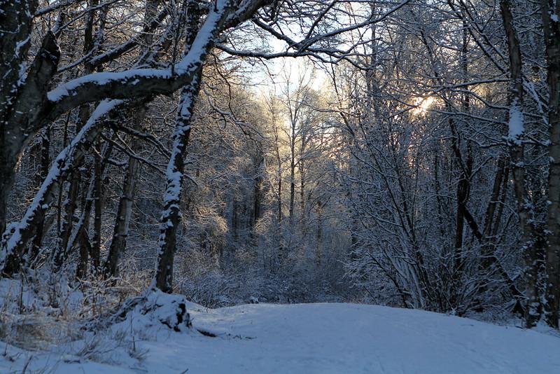 January 15, 2016.  New snow on the Coastal Trail