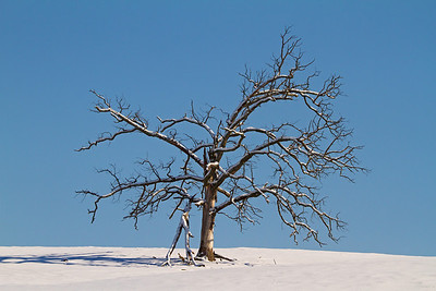 Cold Tree of Time