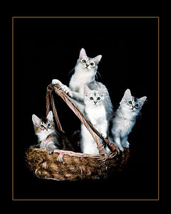 Basket of Purr