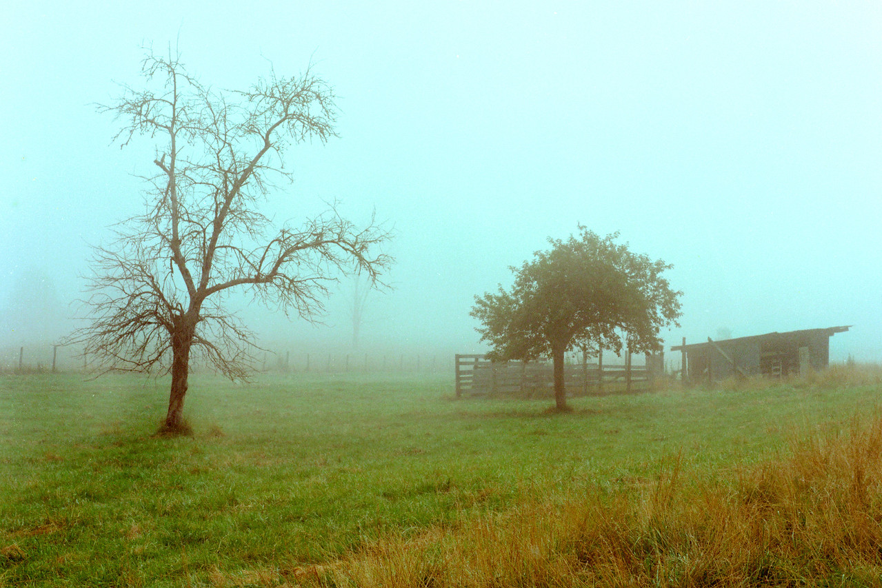 Foggy_Meadow