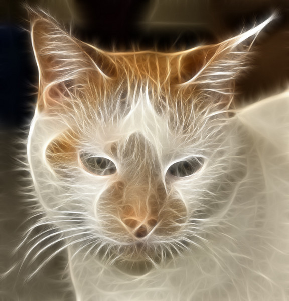 My cat Spike.<br /> <br /> Used the Fractalus plug in to get this effect. The eyes tend to get a little lost when you use this plug in. I should have used the plug on a layer so I could erase some of the effect from her eyes.