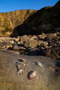 Fossils (Dunraven Bay)