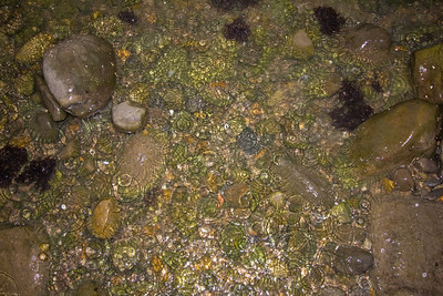 Rockpool raindrops (Llantwit Major beach)