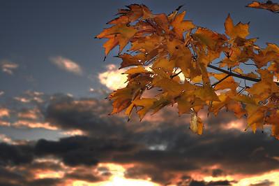 11/13/09  Sunset