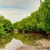 Mangrove Cove