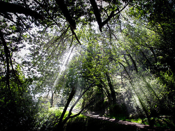 Light Rays On The Trail