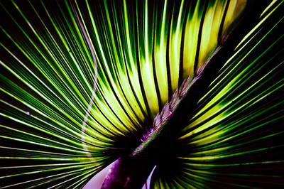 Monday, June 4, 2012. Palm leaf in the Florida Everglades.