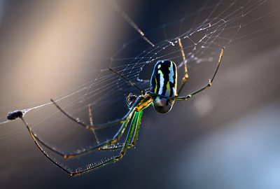 Wednesday, May 9, 2012. Spider in the early morning light.