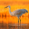Grand Prize<br /> Ken Lee<br /> Birds<br /> Amateur