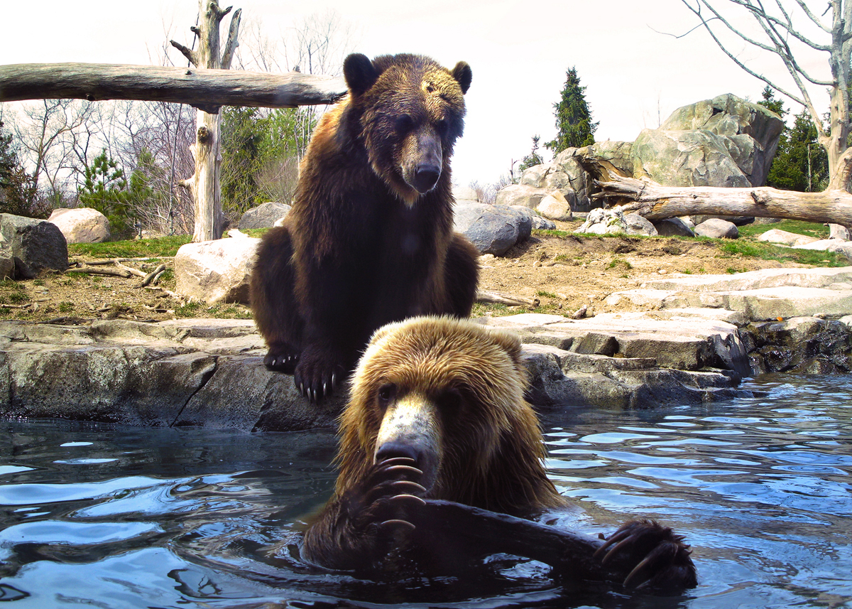 Zoo Bears...  Photo: Dan Pratt