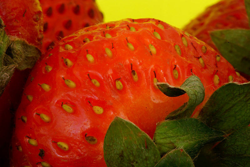 "July.31,2006  <U>Strawberry fuzz</U>  I've been so involved with the drop shots that I never really used the 100f2.8 macro lens right. I figured it's about time :)  The <A href=""http://chandi.smugmug.com/gallery/1707444/1/85291043""><font color=""#ff9933"">drop shots</font></A> are ofcourse continuing all the time - although they aren't getting much better :("
