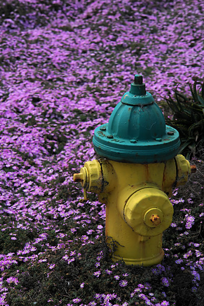 June.19,2006  <U>Chip away</U>  Old paint on a lonely hydrant with a colorful backdrop. Getting up early pays off once in a while :)