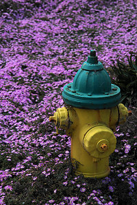 June.19,2006  Chip away  Old paint on a lonely hydrant with a colorful backdrop. Getting up early pays off once in a while :)