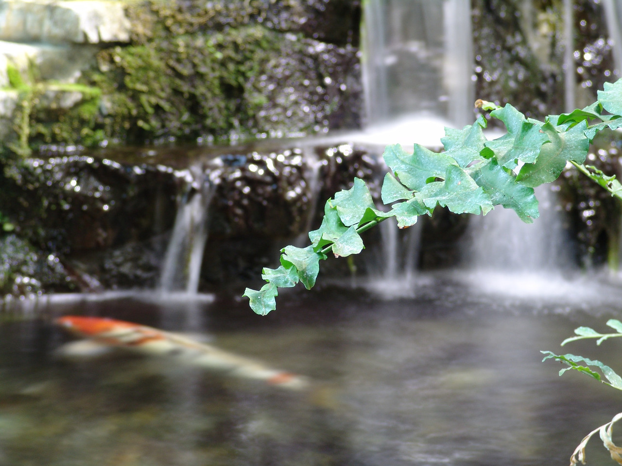 I was experimenting with a long exposure (1 second) and playing with the composition of the shot. Here, the auto focus picked the stray branch over the water. By happy coincidence the fish came into the picture. The picture seems to have a lagoon feeling.